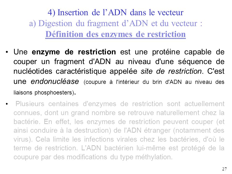 4) Insertion de l'ADN dans le vecteur a) Digestion du fragment d'ADN et du vecteur : Définition des enzymes de restriction