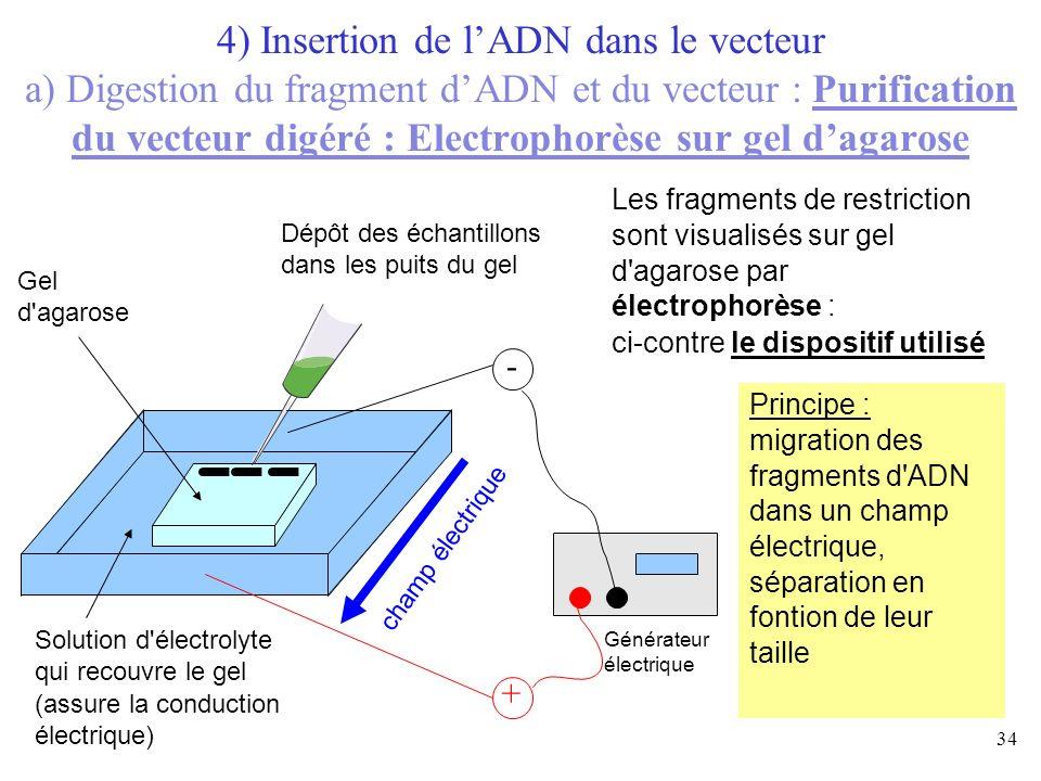 4) Insertion de l'ADN dans le vecteur a) Digestion du fragment d'ADN et du vecteur : Purification du vecteur digéré : Electrophorèse sur gel d'agarose