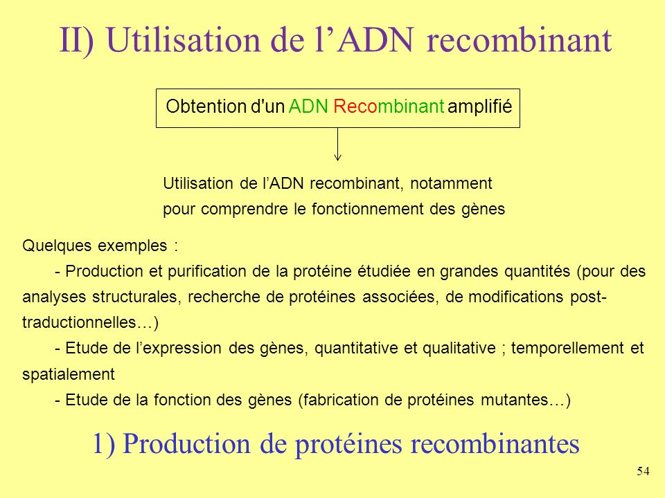 Obtention d un ADN Recombinant amplifié