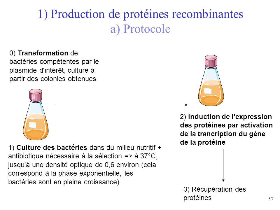 1) Production de protéines recombinantes a) Protocole