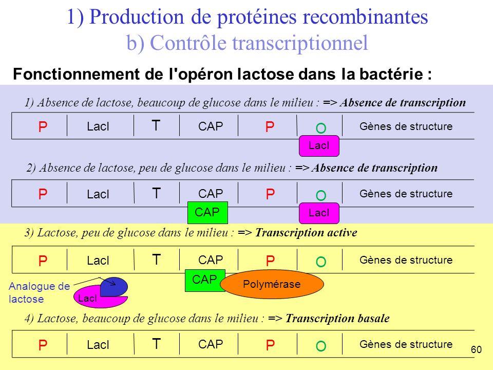 1) Production de protéines recombinantes b) Contrôle transcriptionnel