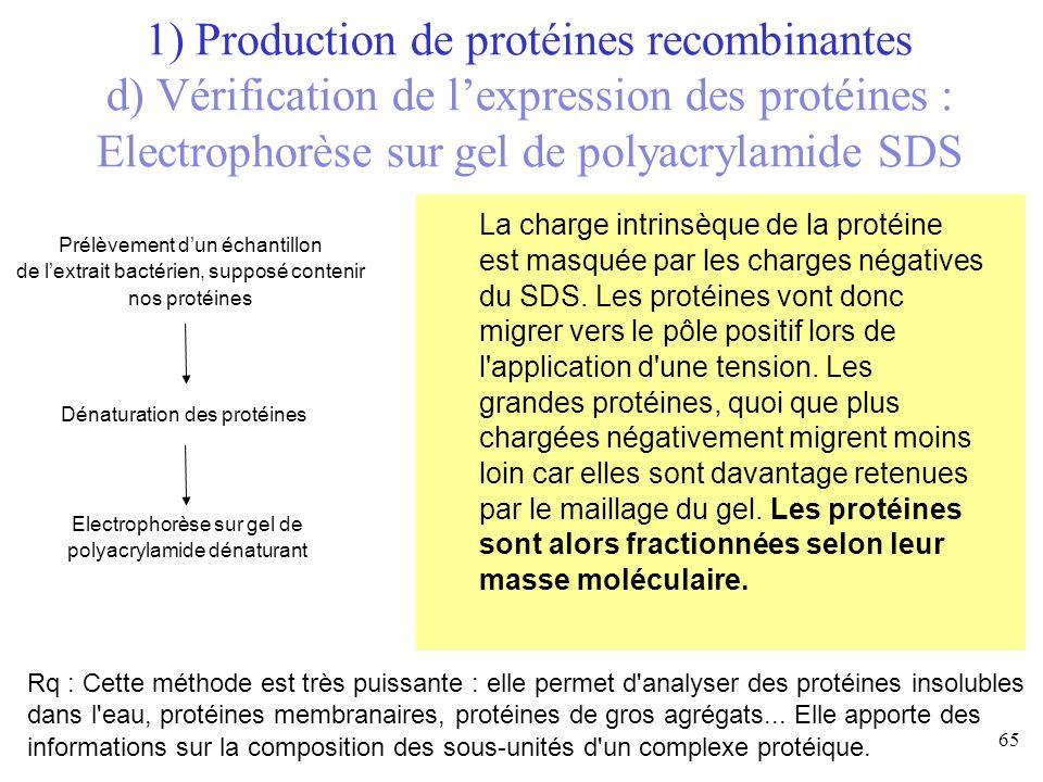 1) Production de protéines recombinantes d) Vérification de l'expression des protéines : Electrophorèse sur gel de polyacrylamide SDS