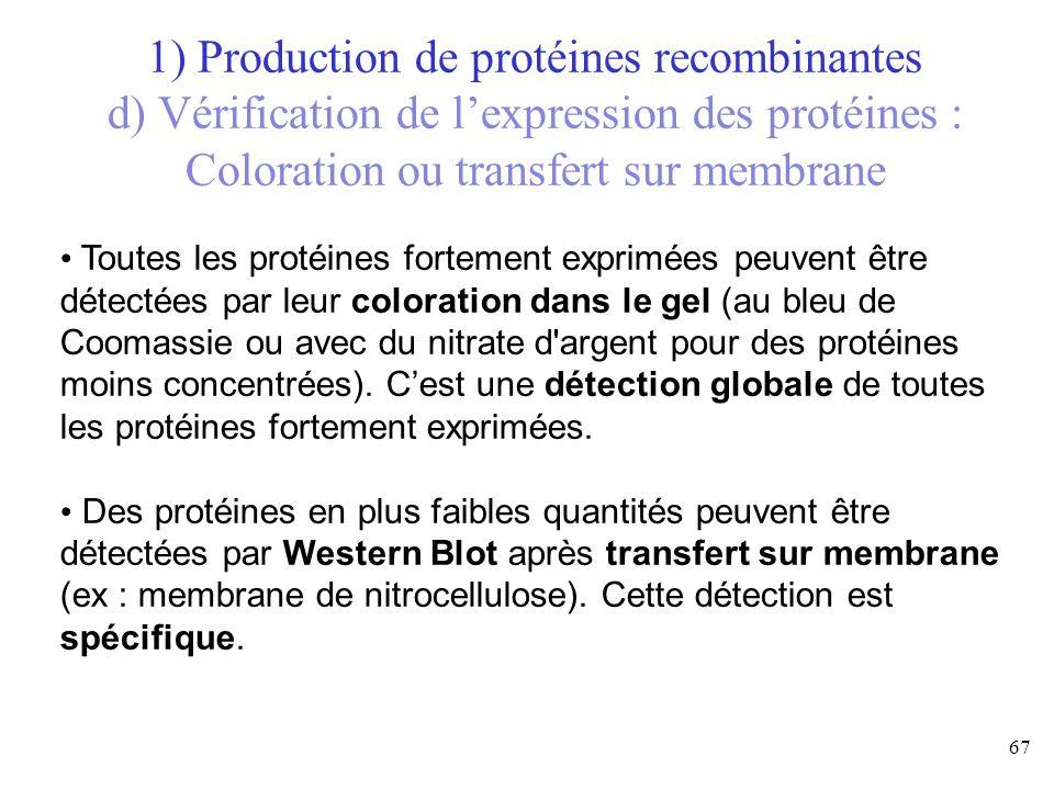 1) Production de protéines recombinantes d) Vérification de l'expression des protéines : Coloration ou transfert sur membrane