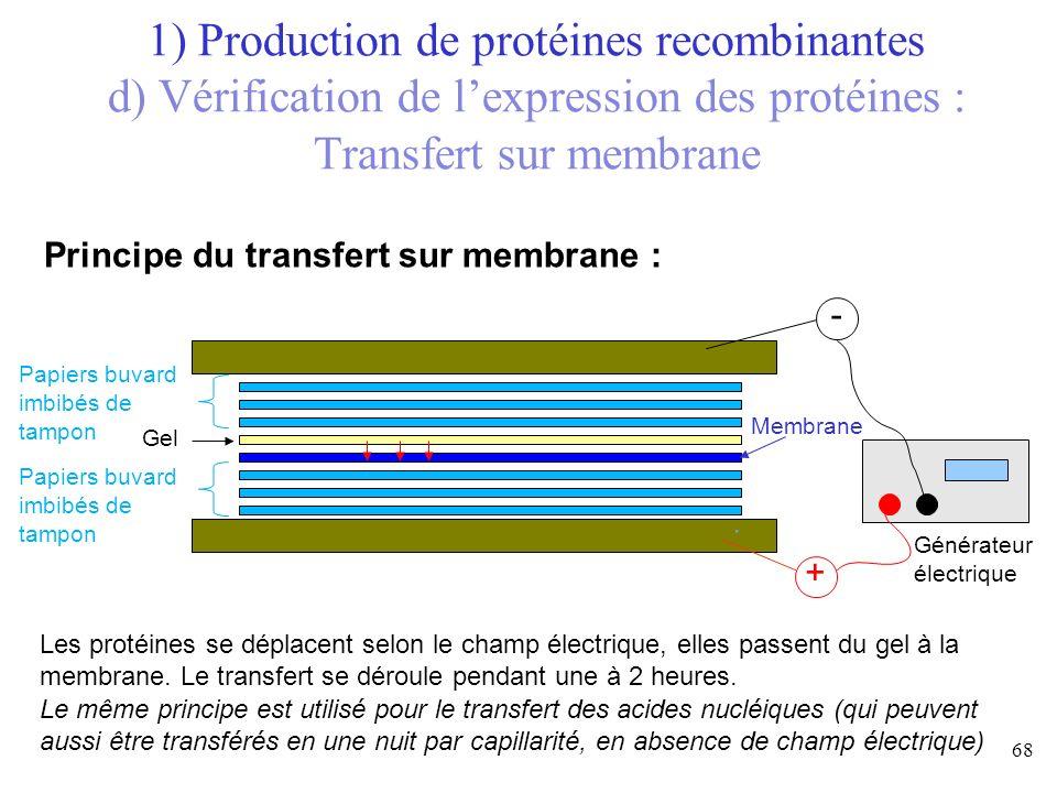 1) Production de protéines recombinantes d) Vérification de l'expression des protéines : Transfert sur membrane