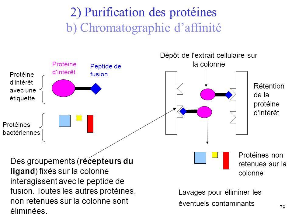 2) Purification des protéines b) Chromatographie d'affinité
