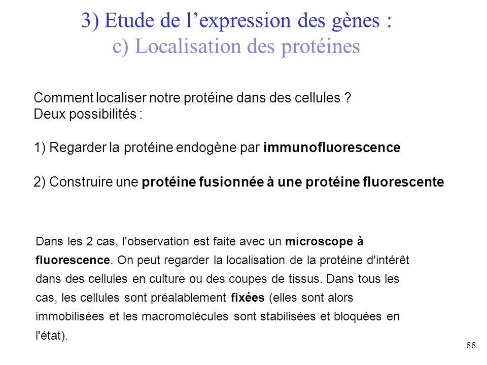 3) Etude de l'expression des gènes : c) Localisation des protéines
