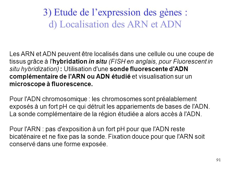 3) Etude de l'expression des gènes : d) Localisation des ARN et ADN