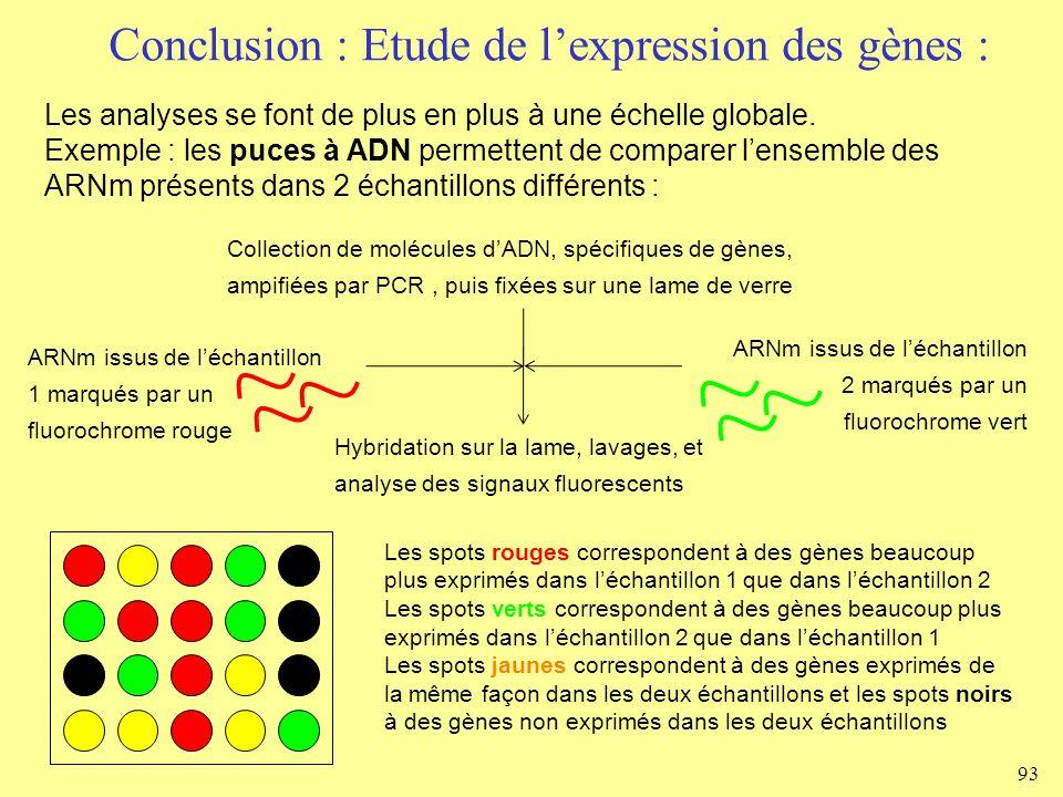 Conclusion : Etude de l'expression des gènes :