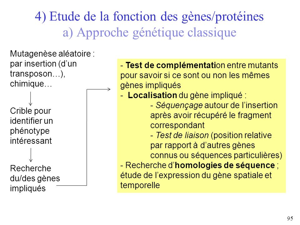 4) Etude de la fonction des gènes/protéines a) Approche génétique classique