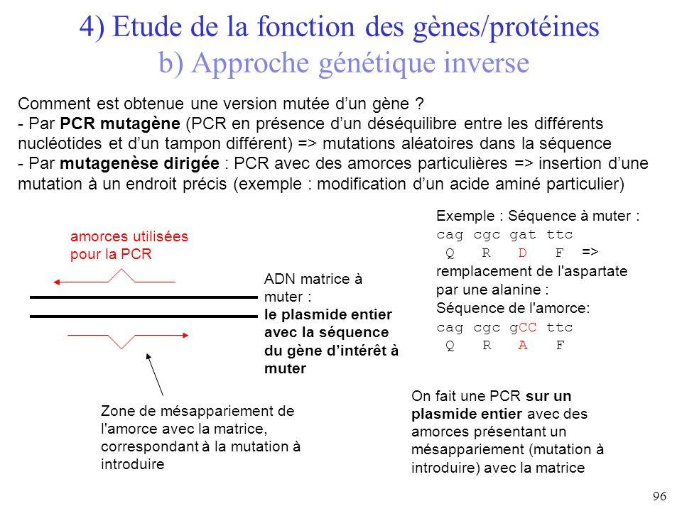 4) Etude de la fonction des gènes/protéines b) Approche génétique inverse