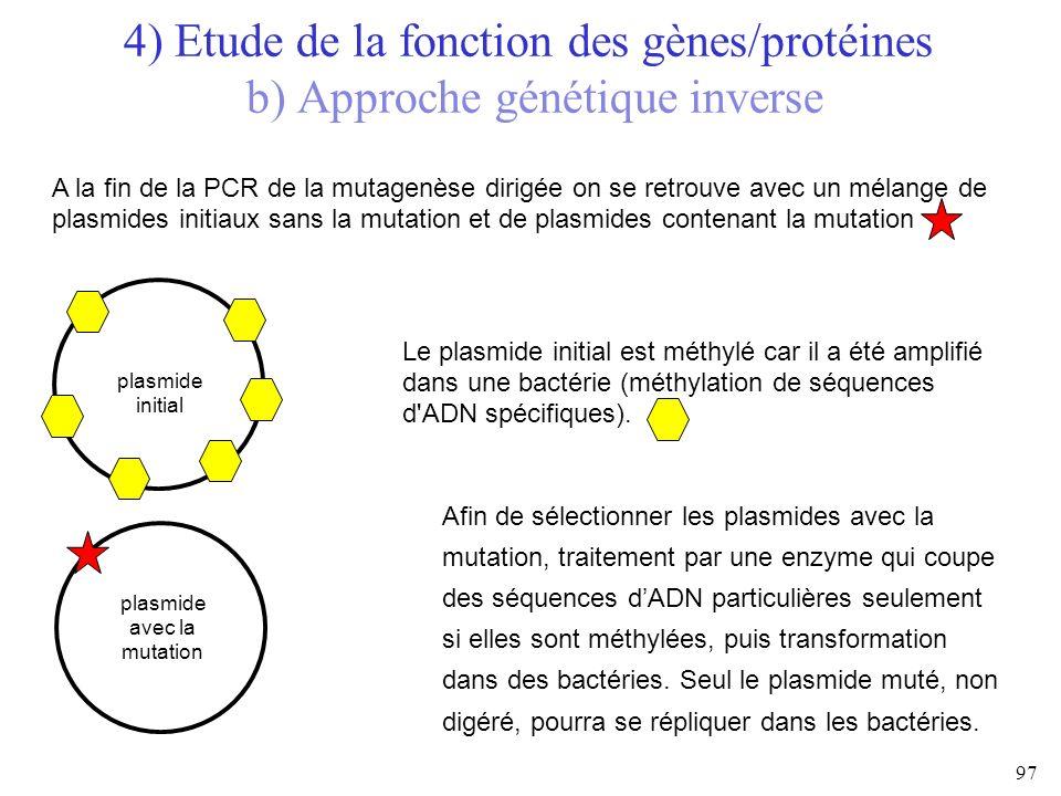 plasmide avec la mutation