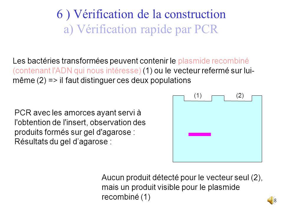 6 ) Vérification de la construction a) Vérification rapide par PCR