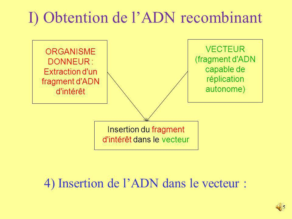 I) Obtention de l'ADN recombinant