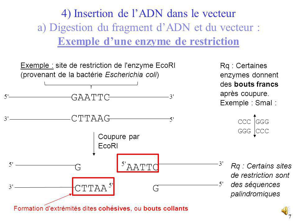 4) Insertion de l'ADN dans le vecteur a) Digestion du fragment d'ADN et du vecteur : Exemple d'une enzyme de restriction