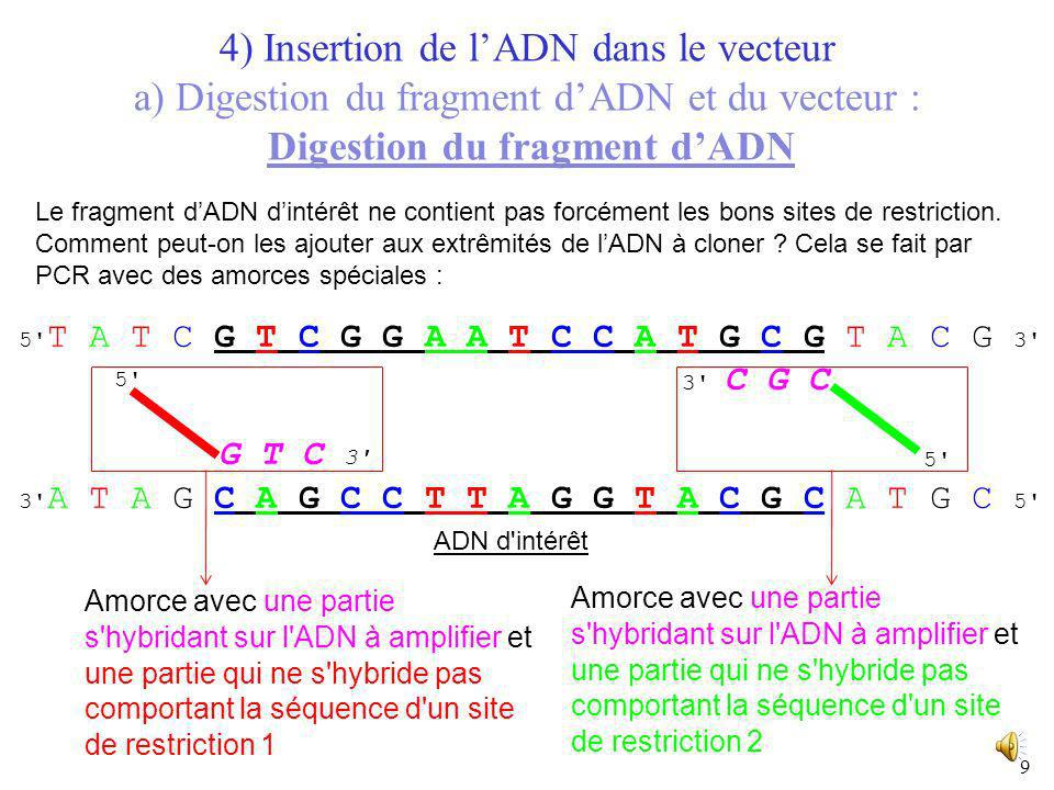 4) Insertion de l'ADN dans le vecteur a) Digestion du fragment d'ADN et du vecteur : Digestion du fragment d'ADN