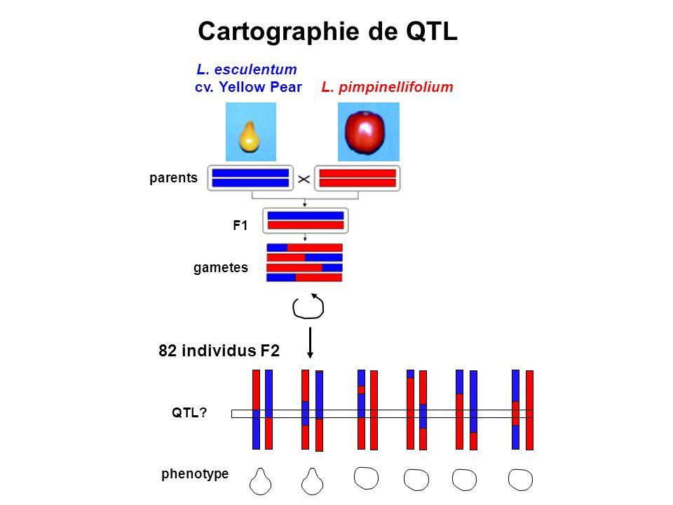 Cartographie de QTL 82 individus F2 L. esculentum cv. Yellow Pear