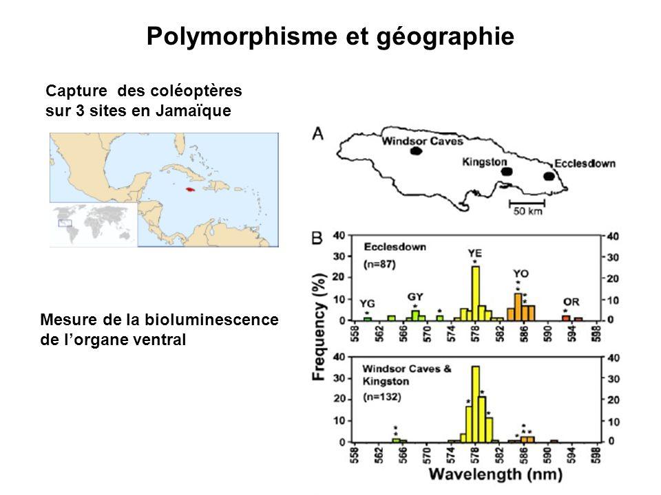 Polymorphisme et géographie
