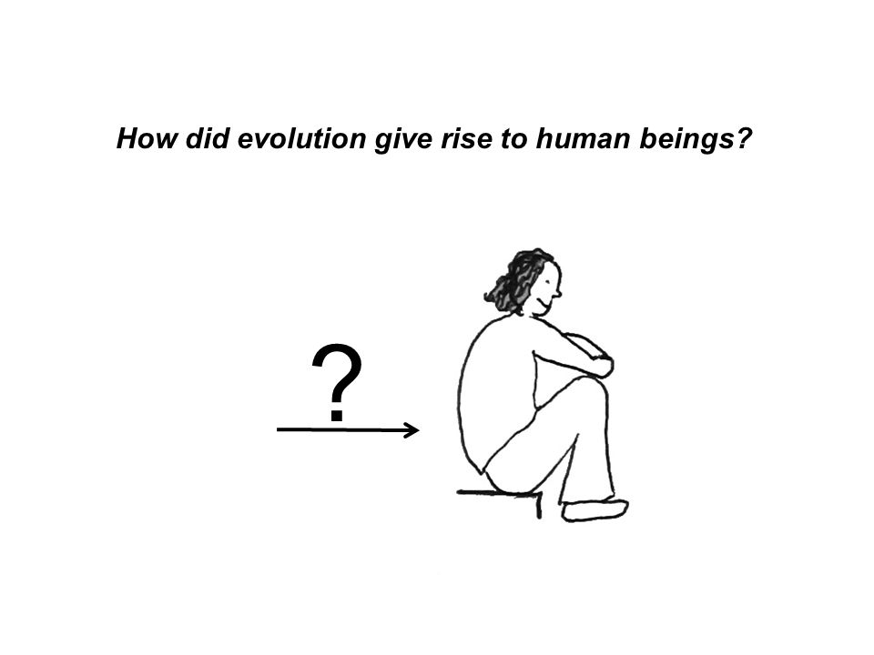 How did evolution give rise to human beings