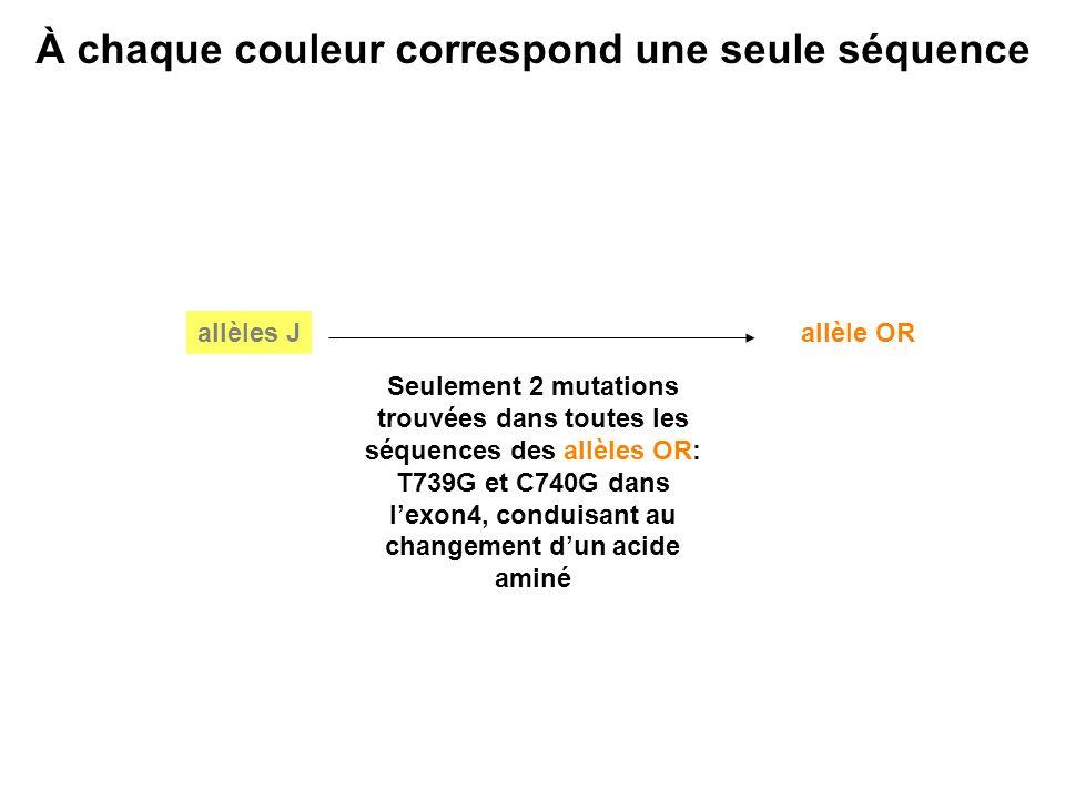 T739G et C740G dans l'exon4, conduisant au changement d'un acide aminé