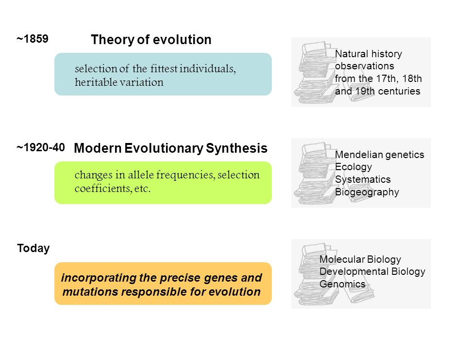 Modern Evolutionary Synthesis