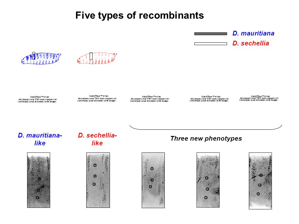 Five types of recombinants