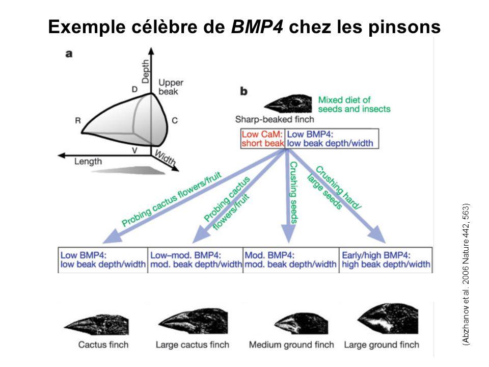 Exemple célèbre de BMP4 chez les pinsons