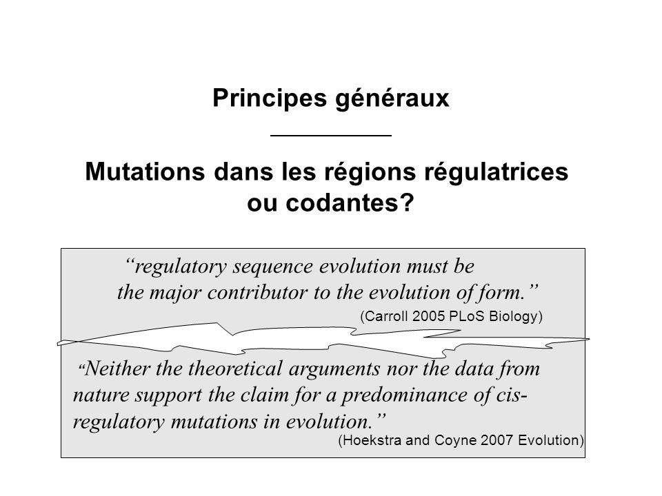 Mutations dans les régions régulatrices