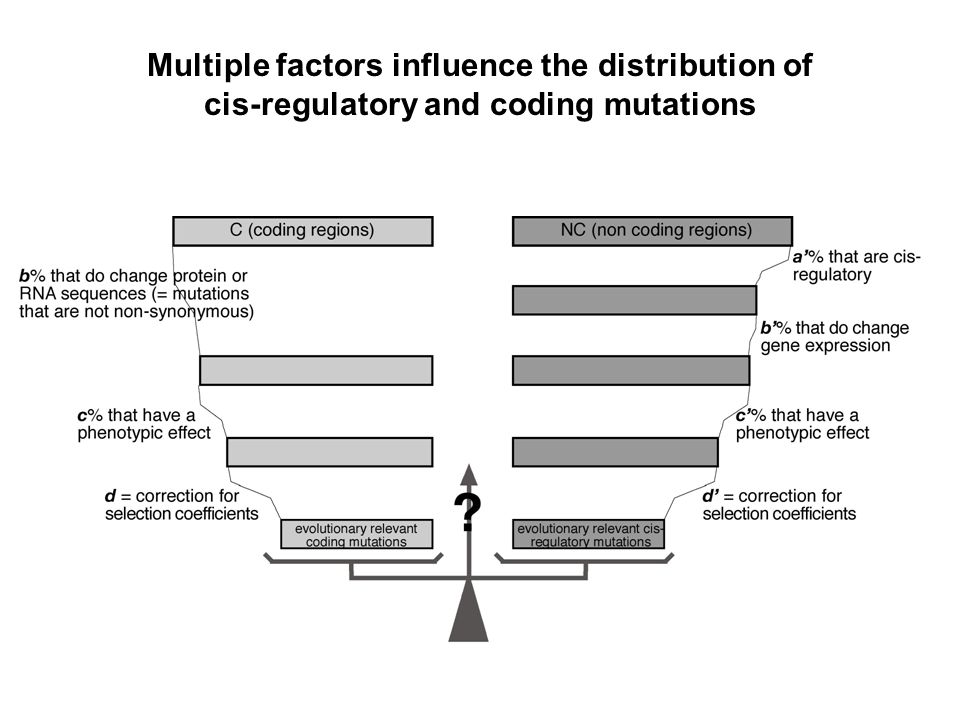 Multiple factors influence the distribution of cis-regulatory and coding mutations
