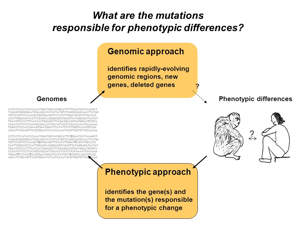 responsible for phenotypic differences