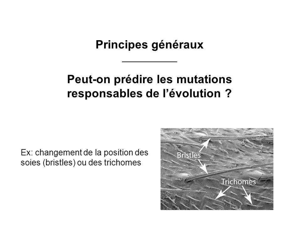 Peut-on prédire les mutations responsables de l'évolution