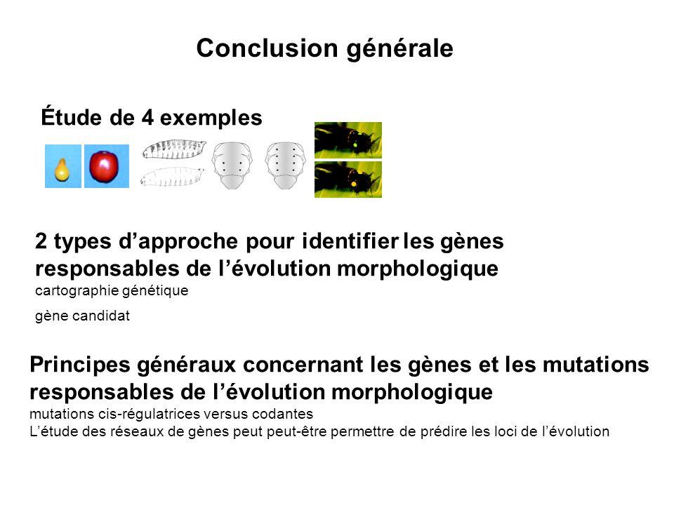 Conclusion générale Étude de 4 exemples