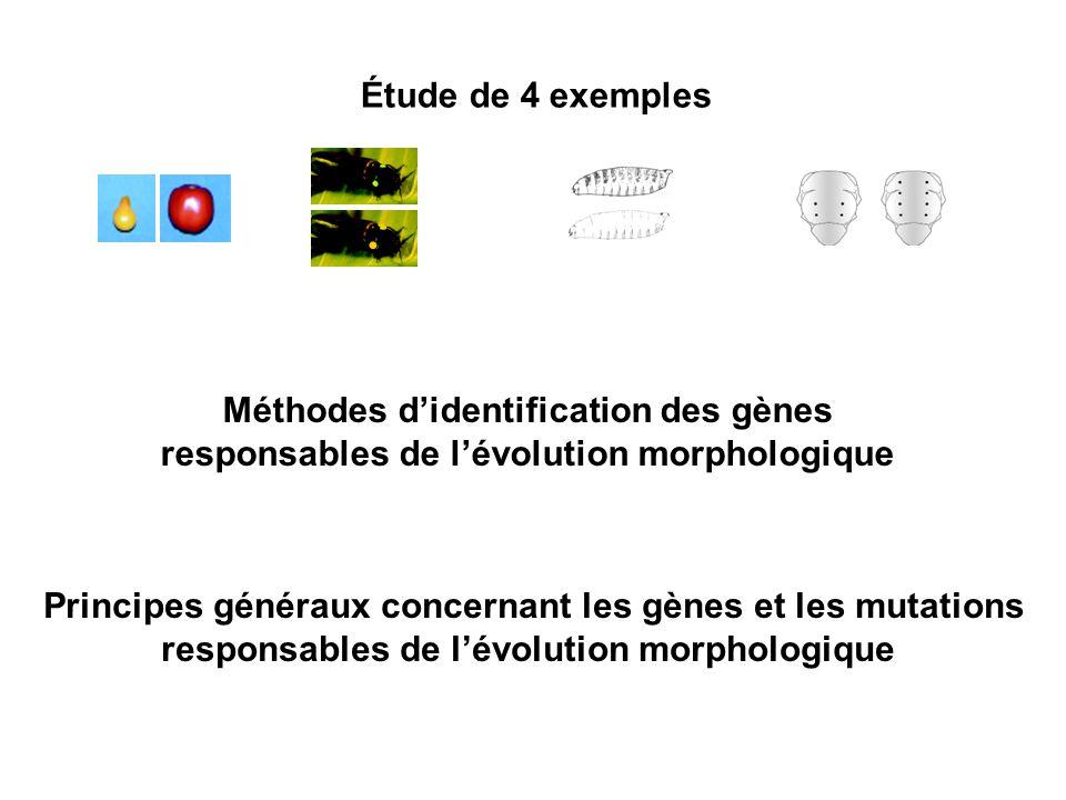 Méthodes d'identification des gènes