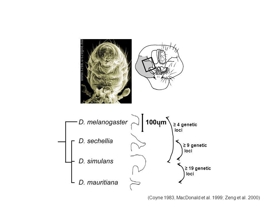 (Coyne 1983, MacDonald et al. 1999; Zeng et al. 2000)