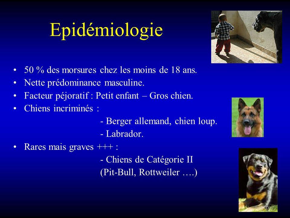 Epidémiologie 50 % des morsures chez les moins de 18 ans.