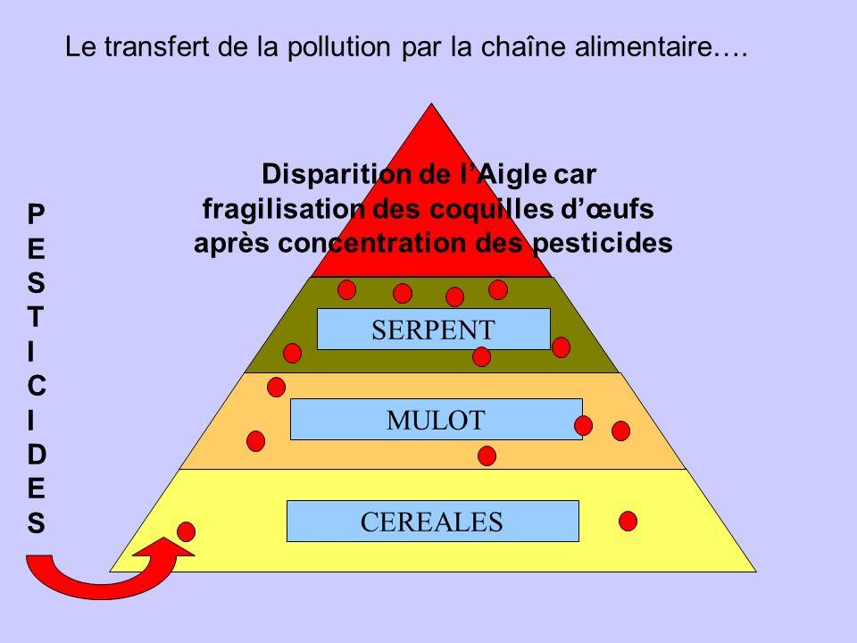 Le transfert de la pollution par la chaîne alimentaire….