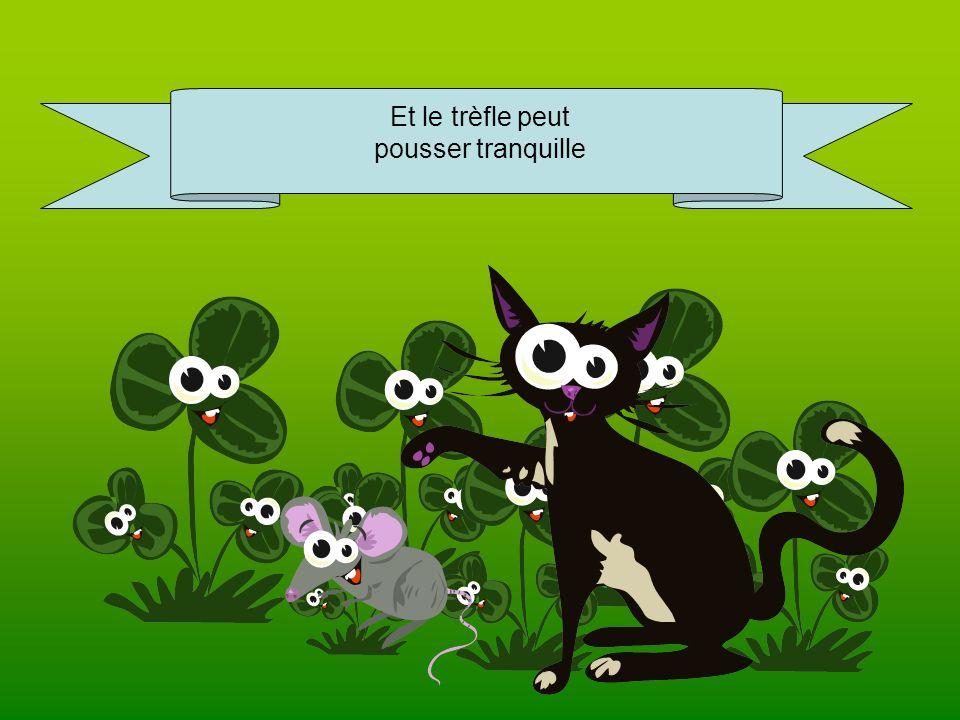 Les chats anglais adorent les mulots