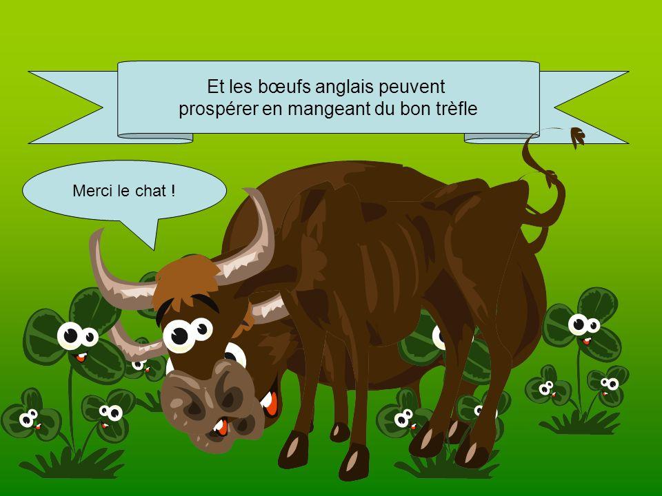 Et les bœufs anglais peuvent prospérer en mangeant du bon trèfle