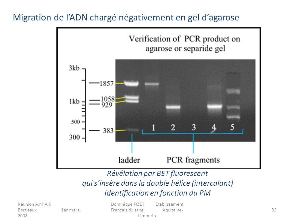 Migration de l'ADN chargé négativement en gel d'agarose