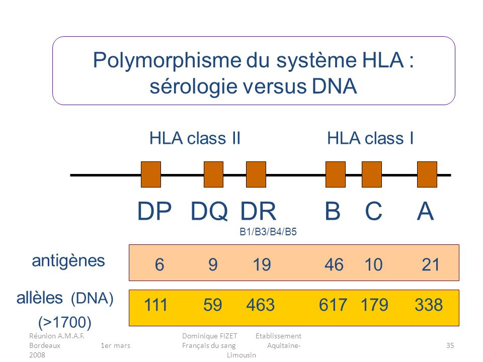 DP DQ DR B C A Polymorphisme du système HLA : sérologie versus DNA