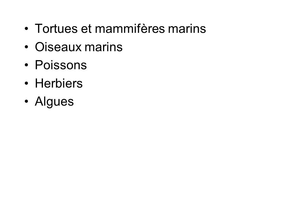 Tortues et mammifères marins