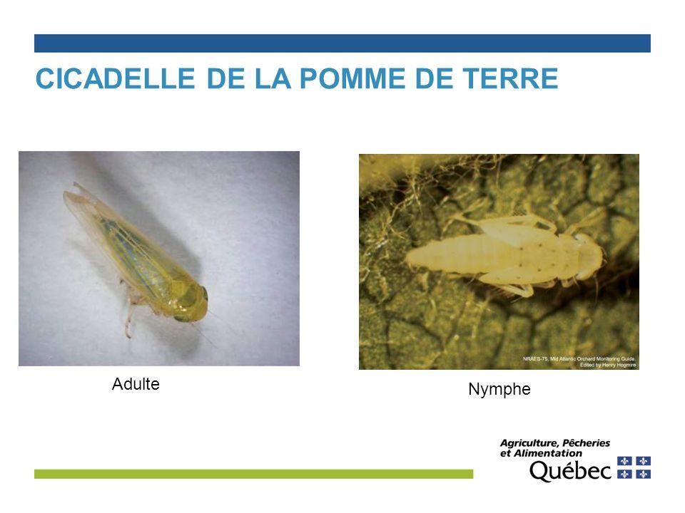 Jacques painchaud m sc agr conseiller en productions ppt video online t l charger - Traitement pomme de terre ...