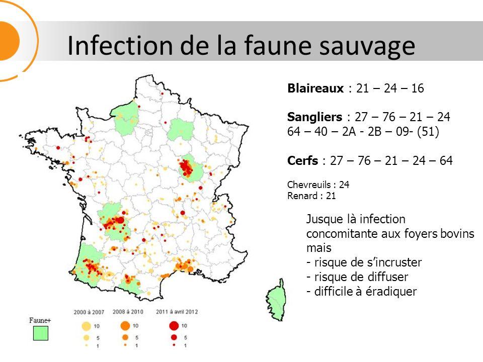 Infection de la faune sauvage