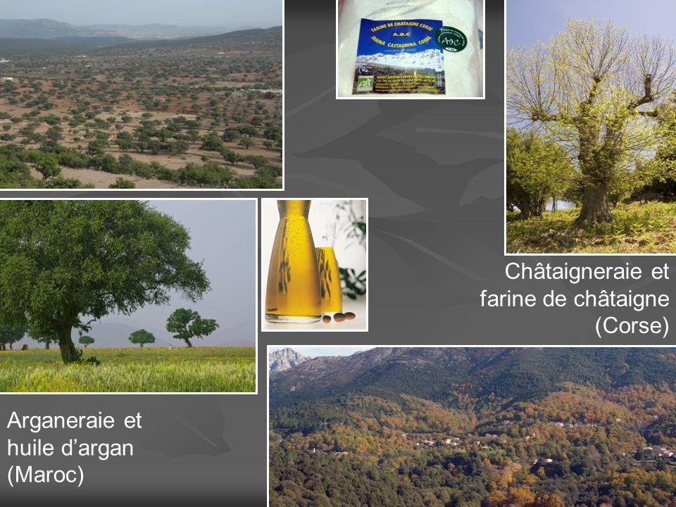 Châtaigneraie et farine de châtaigne (Corse) Arganeraie et huile d'argan (Maroc)
