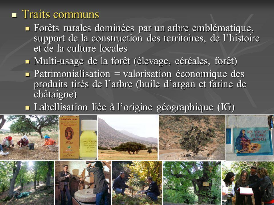 Traits communs Forêts rurales dominées par un arbre emblématique, support de la construction des territoires, de l'histoire et de la culture locales