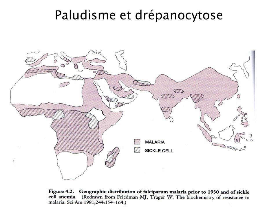Paludisme et drépanocytose