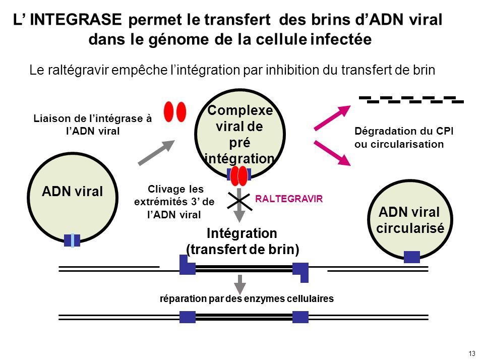 L' INTEGRASE permet le transfert des brins d'ADN viral