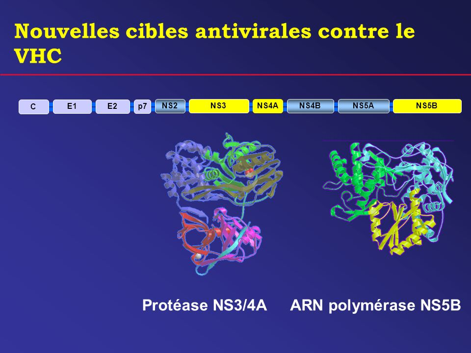 Nouvelles cibles antivirales contre le VHC