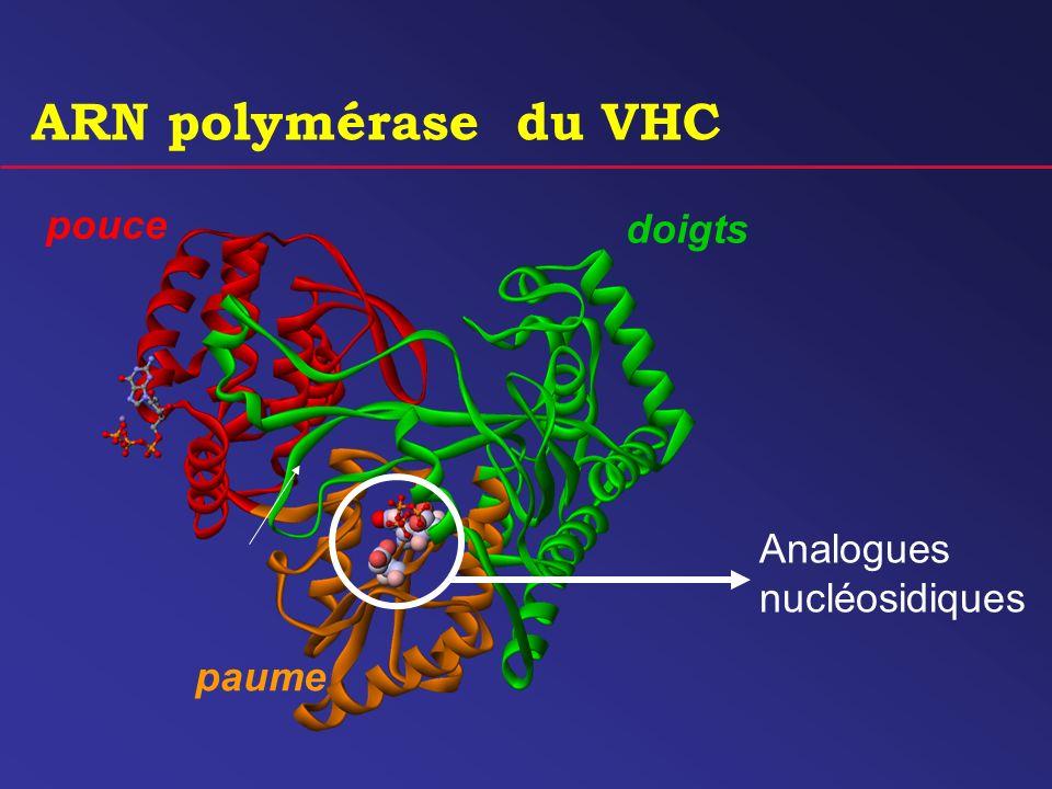 ARN polymérase du VHC pouce doigts Analogues nucléosidiques paume