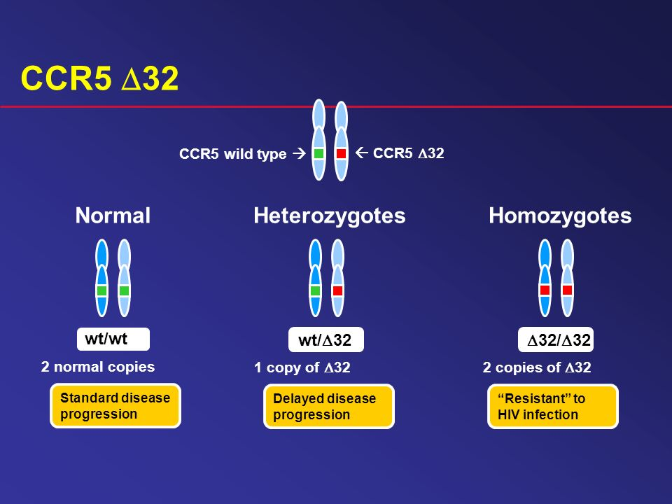 CCR5 D32 Normal Heterozygotes Homozygotes wt/wt wt/32 32/32