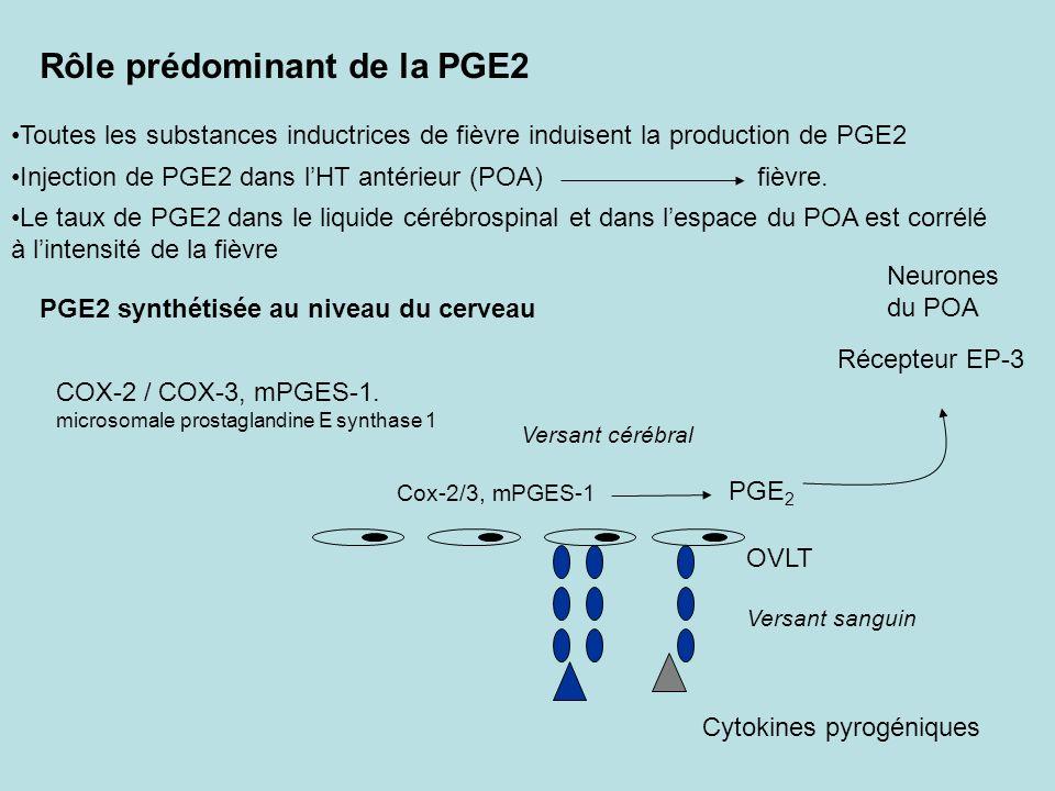 Rôle prédominant de la PGE2